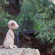 surikat